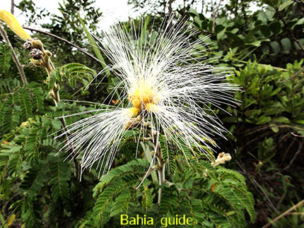 Special bloemen kan je hier op elk moment vinden, fotos Chapada Diamantina nationaal park, wandelingen & trekking met vlaamse reis-gids Ivan (die al 10 jaar in Bahia woont) voor uw rond-reis met begeleiding in het Nederlands in Brazilië