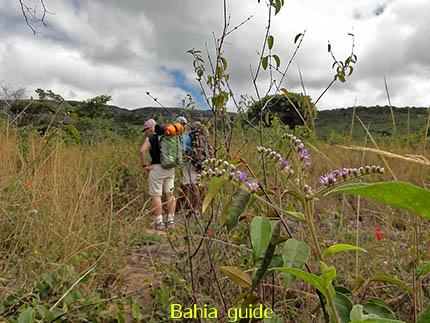 nooit uitgekeken op de vegetatie, fotos Chapada Diamantina nationaal park, wandelingen & trekking met vlaamse reis-gids Ivan (die al 10 jaar in Bahia woont) voor uw rond-reis met begeleiding in het Nederlands in Brazilië