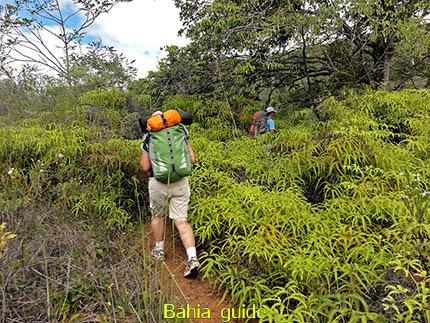 Vegetatie dichter begroeid naarmate we vorderen, fotos Chapada Diamantina nationaal park, wandelingen & trekking met vlaamse reis-gids Ivan (die al 10 jaar in Bahia woont) voor uw rond-reis met begeleiding in het Nederlands in Brazilië
