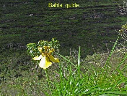 wilde orchidee, fotos Chapada Diamantina nationaal park, wandelingen & trekking met vlaamse reis-gids Ivan (die al 10 jaar in Bahia woont) voor uw rond-reis met begeleiding in het Nederlands in Brazilië